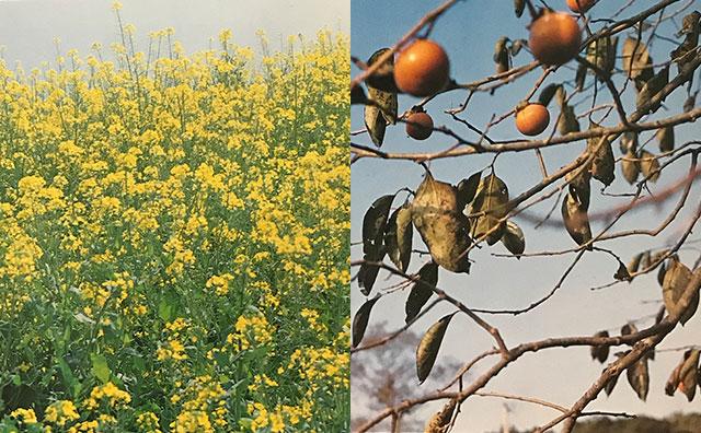 黒酢の仕込み時期は春と秋